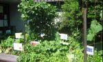Hawker School vegetable garden